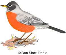 American Robin clipart Turdus migratorius illustration Stock