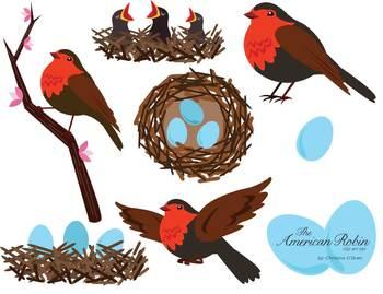 American Robin clipart Clip Art robin Bird American