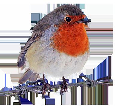 Robin clipart Robin Art Art Clipart Images