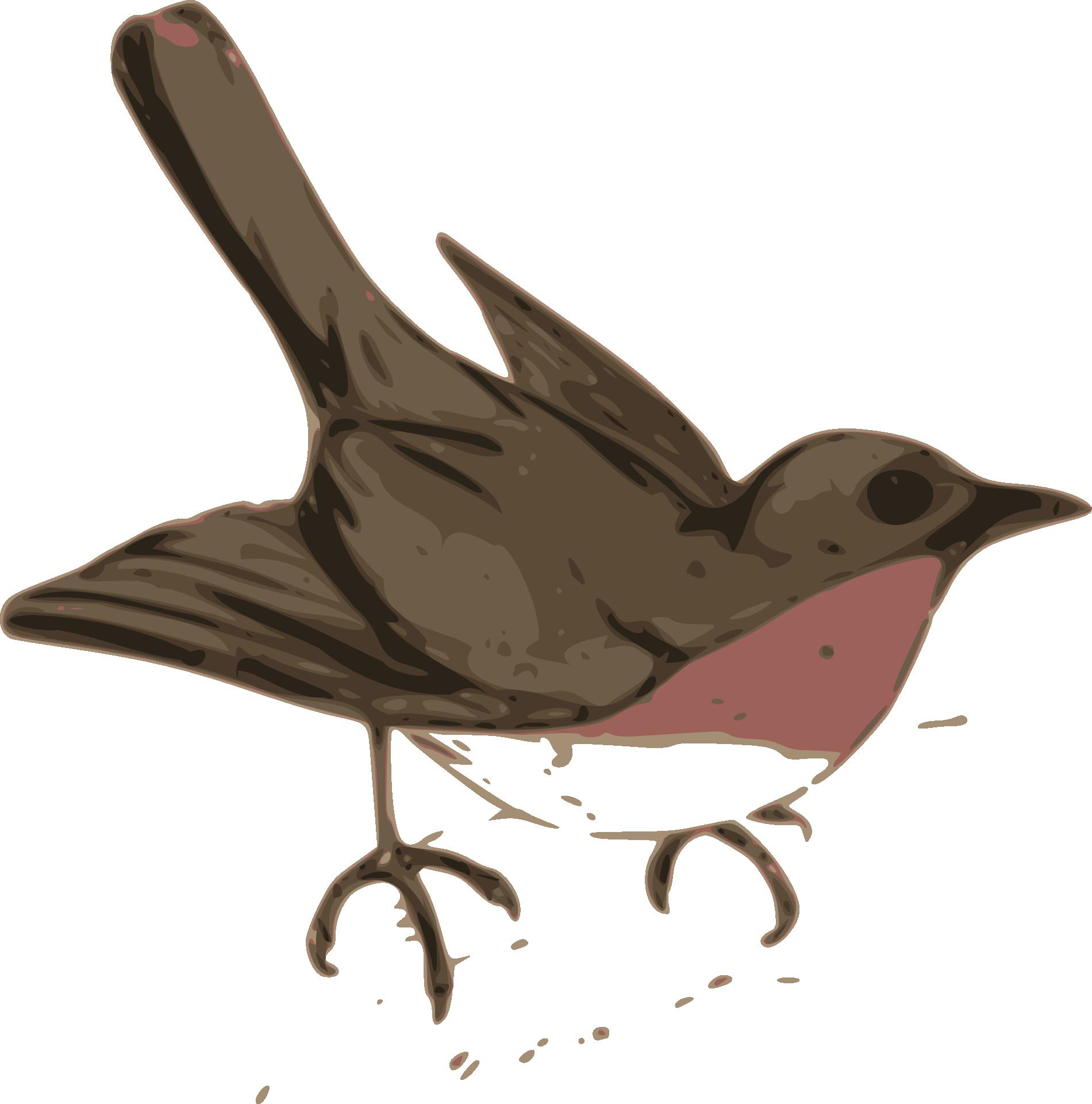 Wren clipart sparrow Svg #10 svg Download Robin