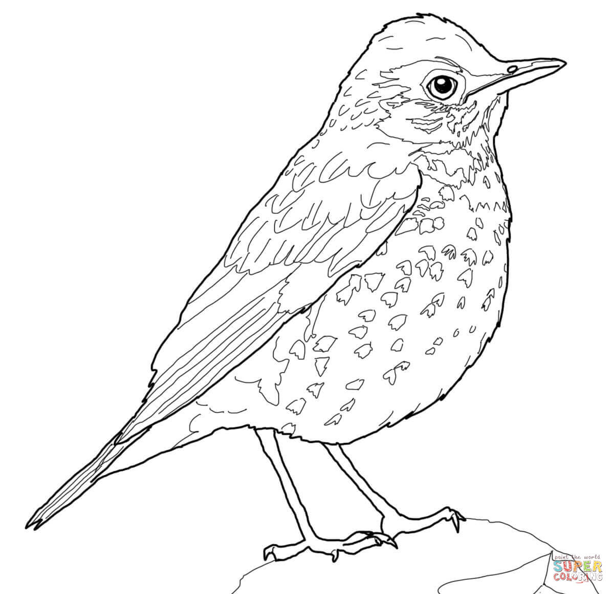 Drawn brds baby bird Pages Thrush Thrush Pages Free