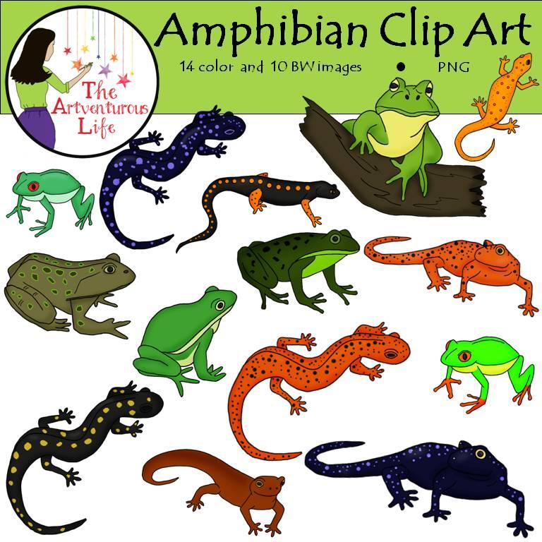 Amphibian clipart Art art and Clip Clip