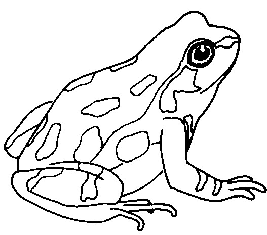 Amphibian clipart drawing Cliparting 67 Frog for com