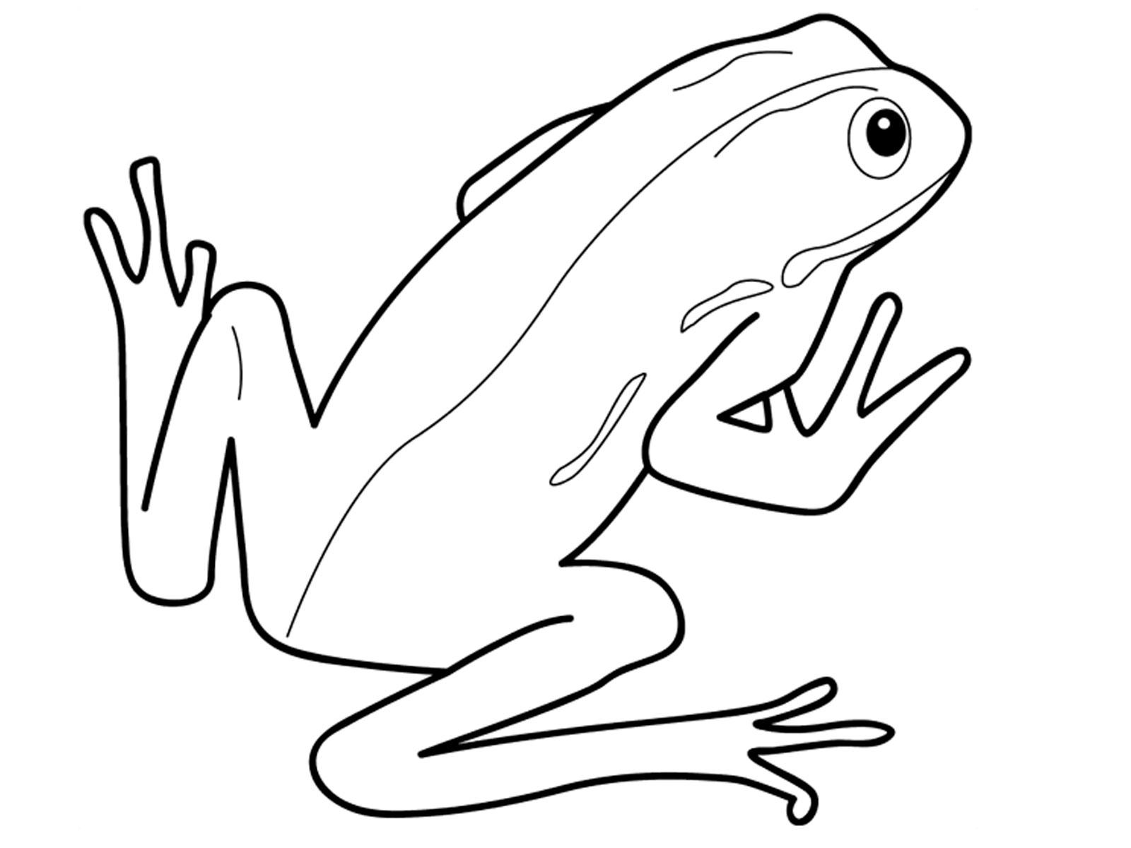 Amphibian clipart drawing Amphibian Amphibian white photo#18 and
