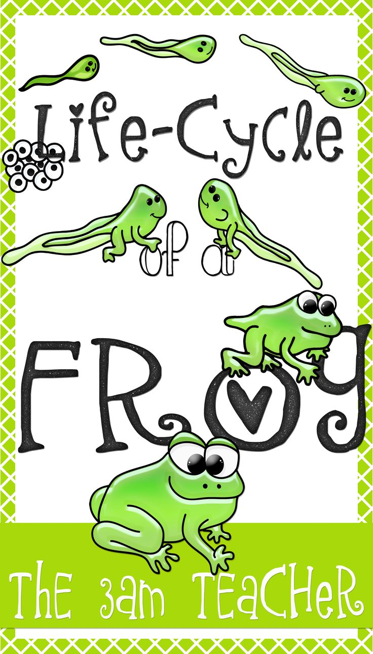 Tree Frog clipart life sciences #1