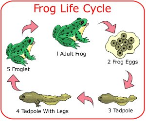 Tree Frog clipart life sciences #3
