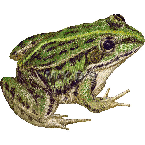 Amphibian clipart spotted Black picture spotted graphics Frog