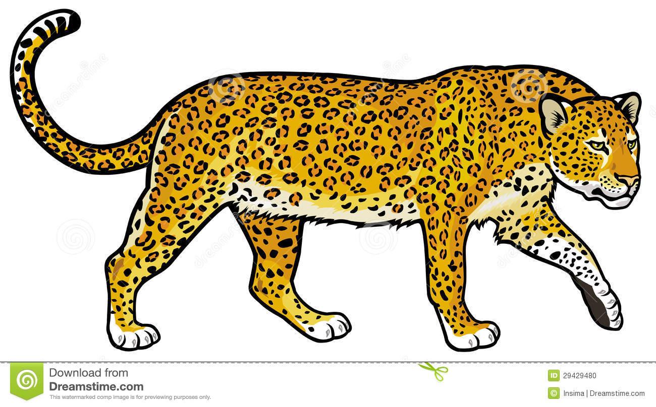 Amur Leopard clipart baby cheetah Clipart Images Clipart Panda Leopard