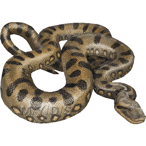Anaconda clipart Large (Free picture art clipart