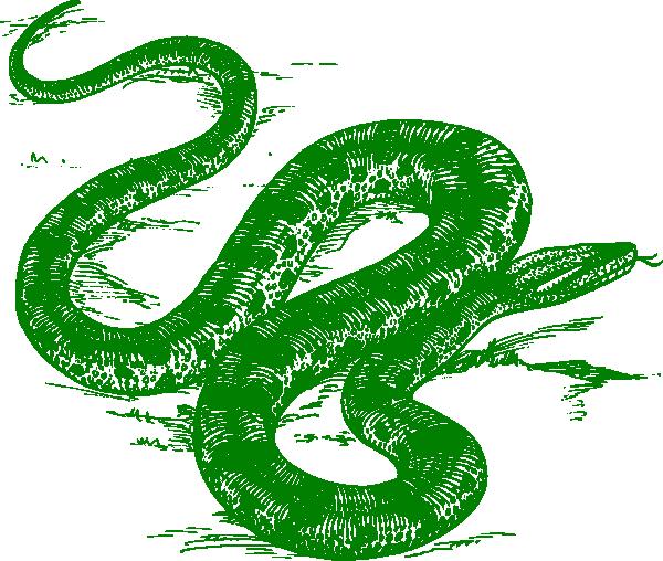 Anaconda clipart green snake Vector Green art online Download