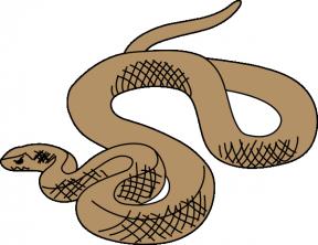Anaconda clipart small snake Aka Plan Image Anaconda Cliparts