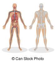 Anatomy clipart Anatomy Anatomy 88 Stock of
