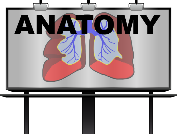 Anatomy clipart Clip royalty com image Download