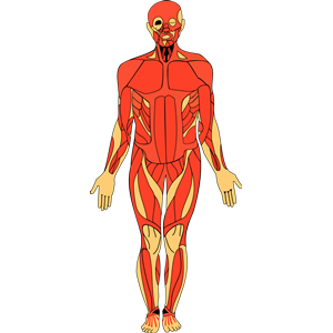 Anatomy clipart Images Clip Anatomy%20clipart Clipart Anatomy