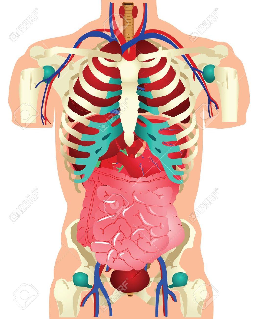 Anatomy clipart Clipart body%20clipart Free Anatomy Panda