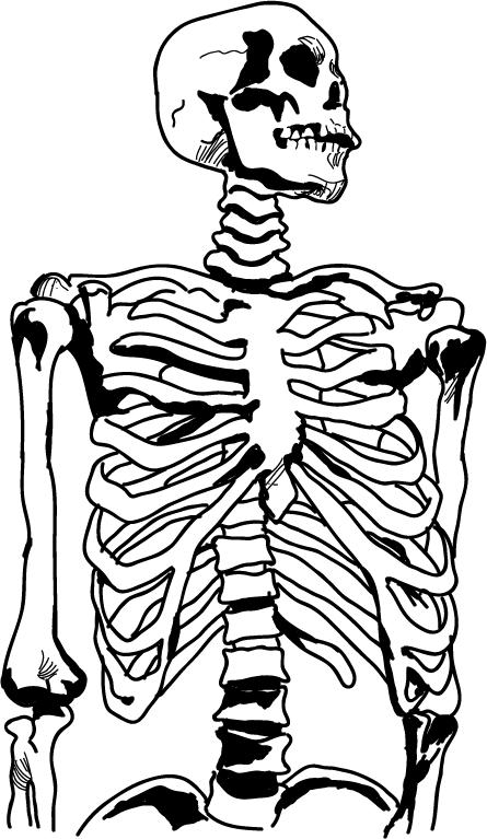 Anatomy clipart Clipart School Anatomy Clipart Clipart