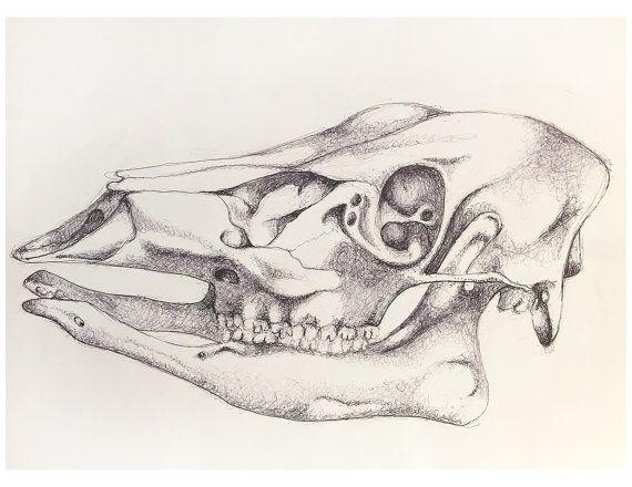 Anatomy clipart animal skull Ideas Deer  Hanging on