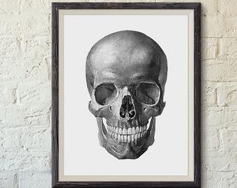 Anatomy clipart animal skull Human Skeleton vintage anatomy art