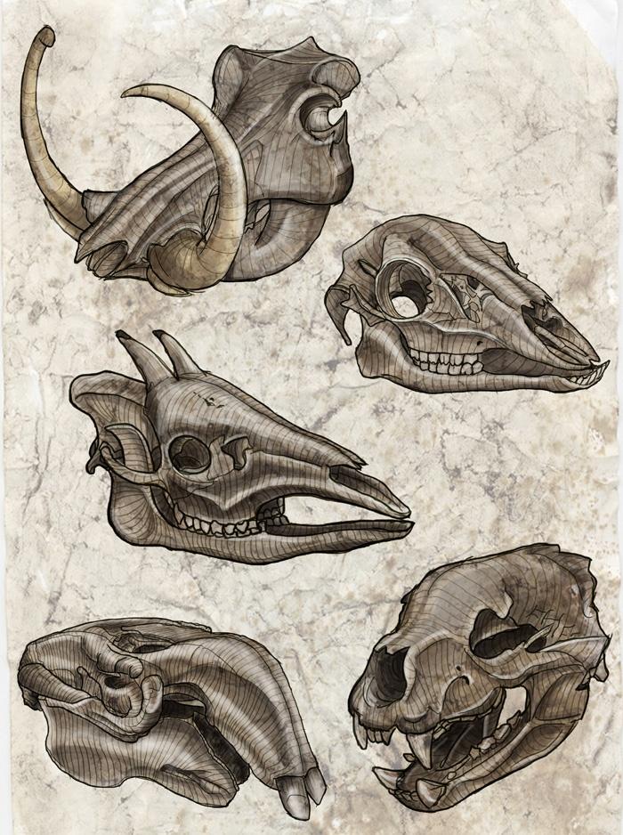 Anatomy clipart animal skull A Best interesting Pinterest Skull