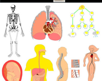 Anatomy clipart metabolism Science printables INSTANT art Biology