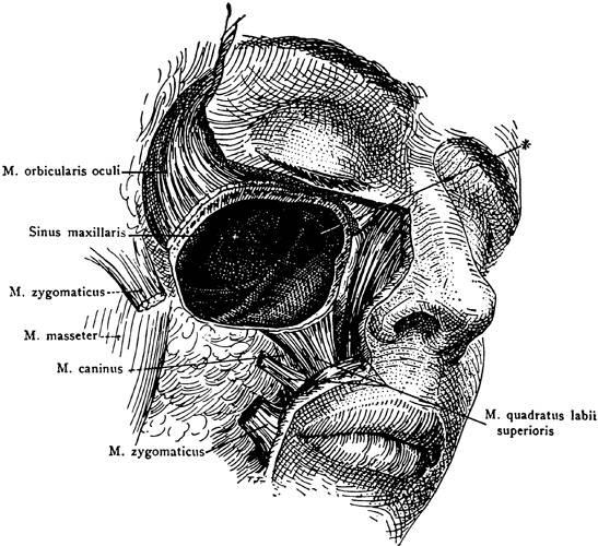 Anatomy clipart biological science Digital art  clipart medical