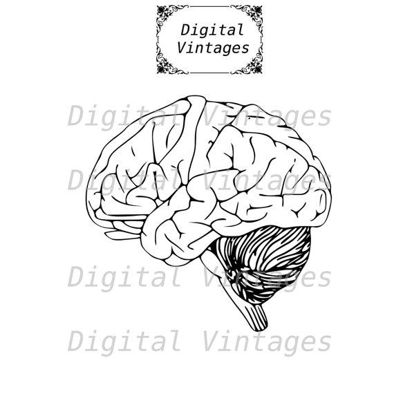 Anatomy clipart brain  file Illustration Design Anatomy