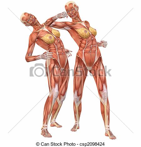 Anatomy clipart human body Female Fight Human of Anatomy