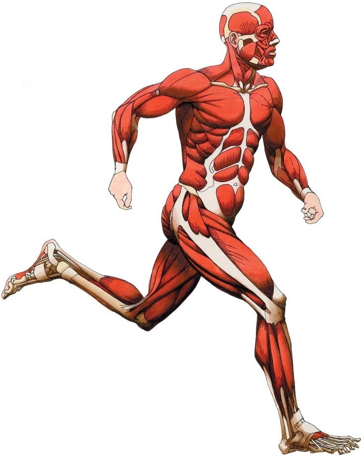 Anatomy clipart kid body Human Clipart Anatomy human For