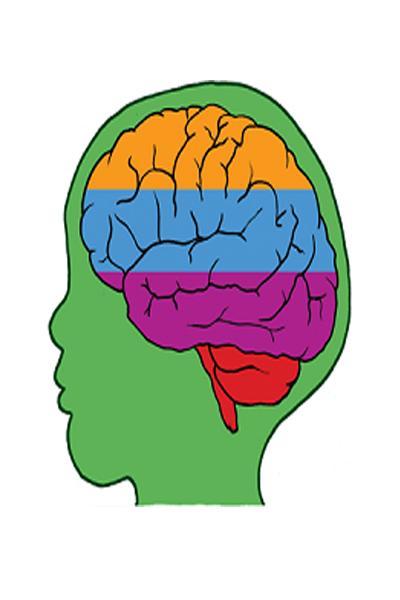 Anatomy clipart neurology #7