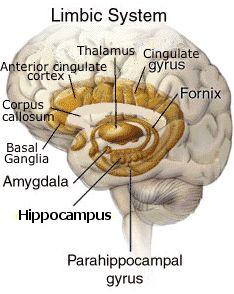 Anatomy clipart neurology #8