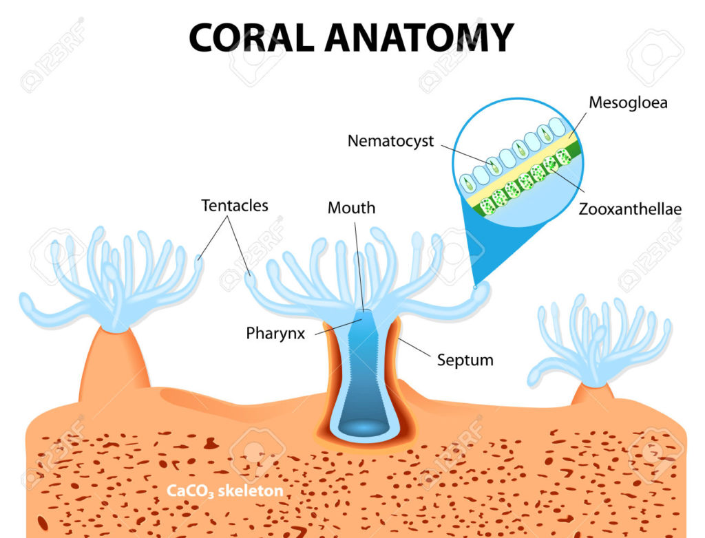 Anatomy clipart starvation Coral Our Are Starving Reefs