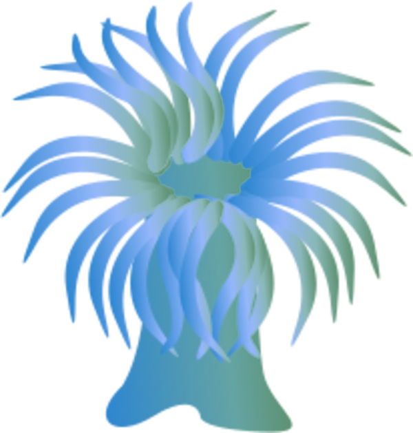 Sea Anemone clipart Cliparts Zone sea Cliparts anemone
