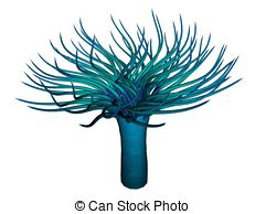 Anemone clipart And illustration Anemone an