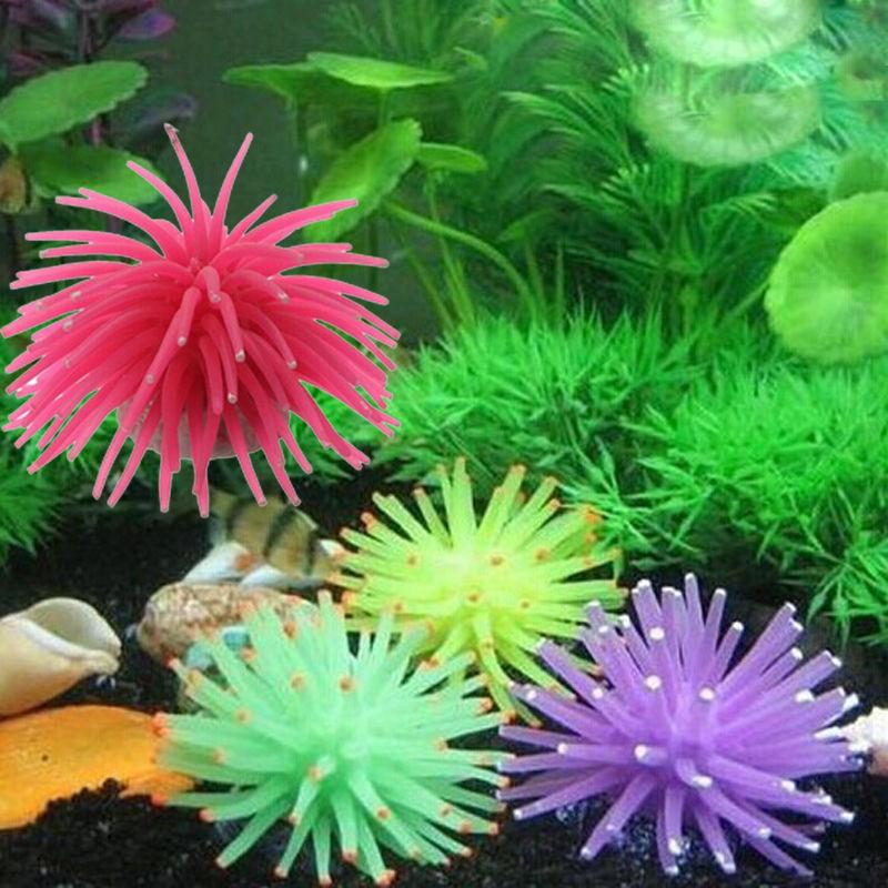 Anemone clipart fish tank plant Fish Plant Corals Cute(China Fish
