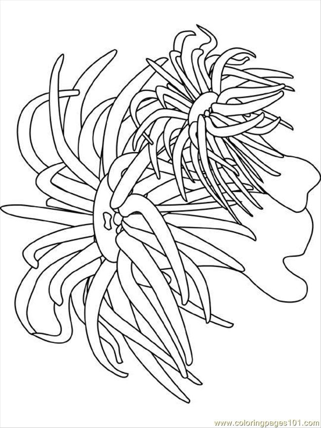 Sea Anemone clipart under sea #3