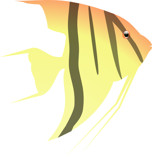 Angelfish clipart orange things Download  Art as: Angel