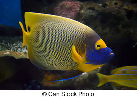 Angelfish clipart beautiful fish Photos the 1 132 pictures