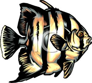 Angelfish clipart colorful fish Angel Angel Fish Tropical Picture