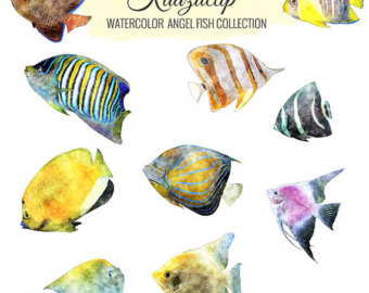 Angelfish clipart colourful fish And Fish Watercolor Fish Commercial