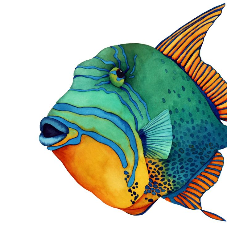 Angelfish clipart fish face Best Queen Face: images Pinterest