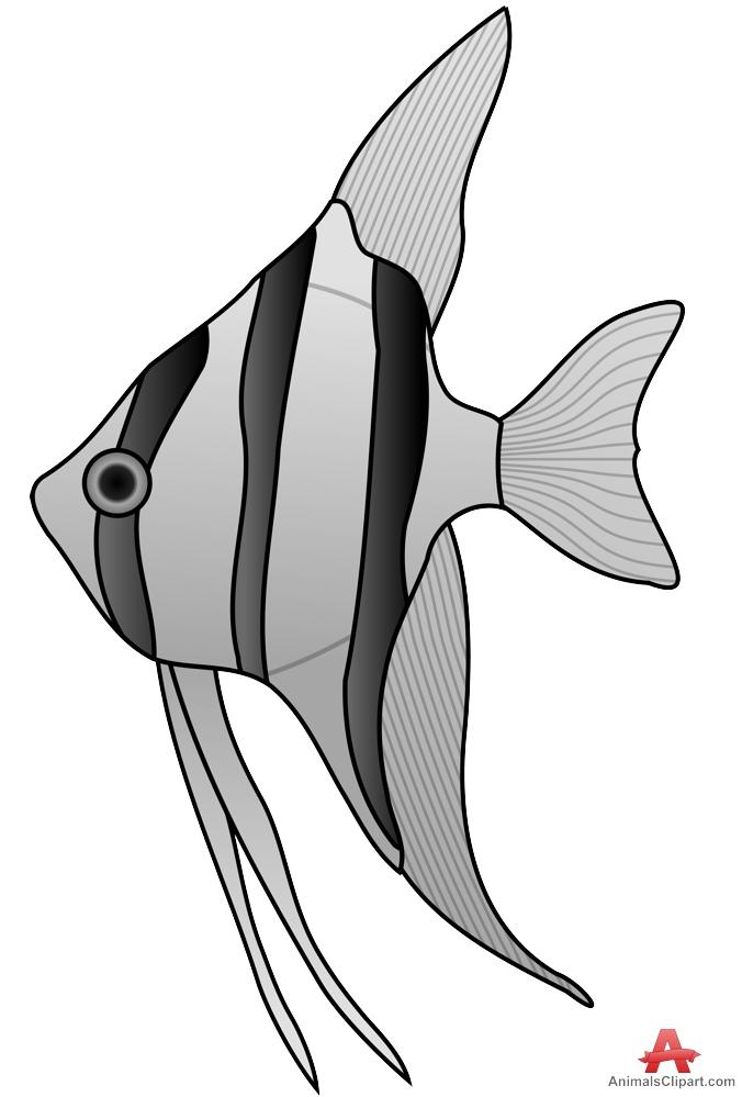 Angelfish clipart fish face Angelfish Altum Free Altum Clipart
