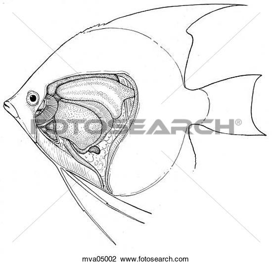 Angelfish clipart fish head 49 water best images fish