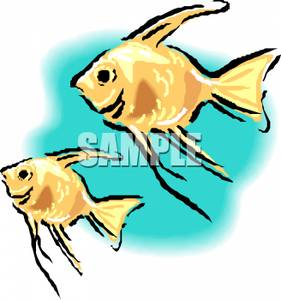 Angelfish clipart fish swimming Free angel Clipart Picture Fish