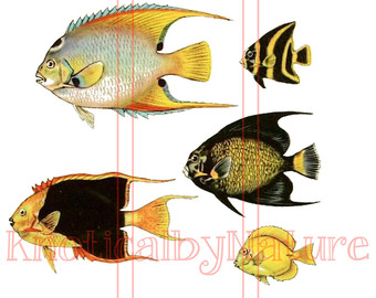 Angelfish clipart orange things Angelfish Angelfish iron clip download
