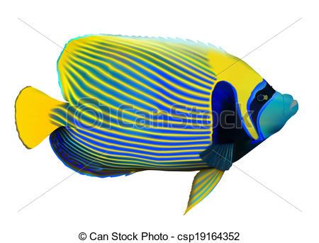 Angelfish clipart royal Angelfish Angelfish white Images art