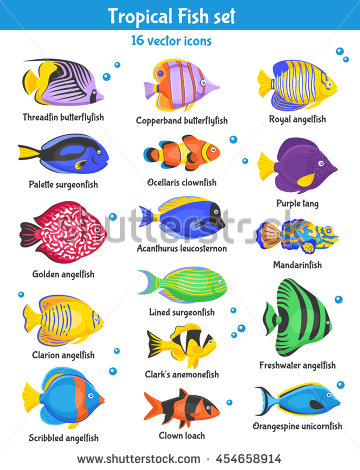 Angelfish clipart tropical fish Species set isolated flat Exotic