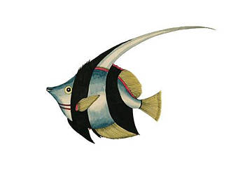 Angelfish clipart tropical fish Clipart tropical Fish fish fish