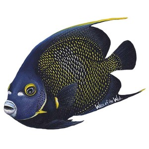 Angelfish clipart tropical fish Fish Murals Polyvore OF WALLS