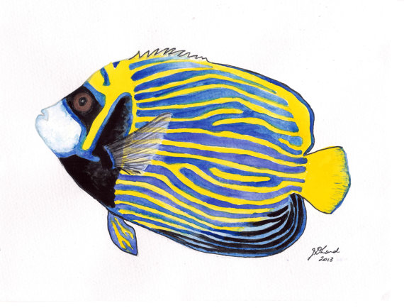 Angelfish clipart tropical fish Original and found tropical Exotic