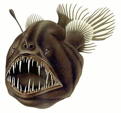 Anglerfish clipart Clipart drawings #14 clipart Anglerfish